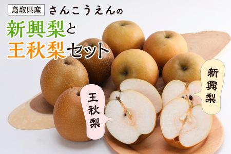 【037】新興梨・王秋梨セット(さんこうえん)