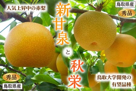 【233】新甘泉・秋栄セット 秀品(スクスク農場)