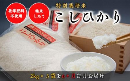 """Y005 """"土づくりの恵み"""" つやっつやの特別栽培米 6ヶ月お届けコース"""