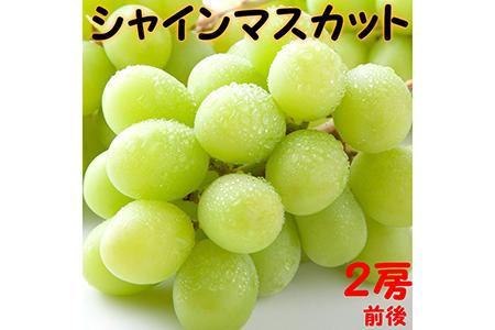 シャインマスカット(種無し) 1kg前後【高間商店】