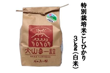 MS-31 特別栽培米こしひかり3kg(白米)