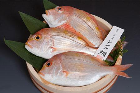 A005:天然釣り連子鯛(下処理済)