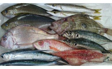 B031 山陰日本海の地魚 おまかせ鮮魚BOX