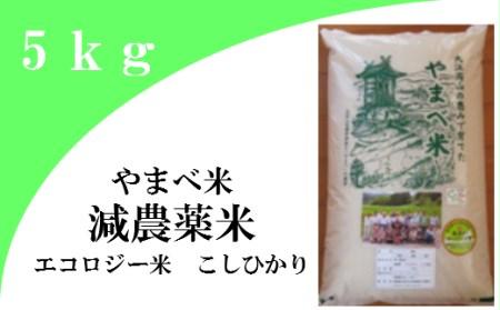 A034③ 【玄米】減農薬米(こしひかり100%)(令和元年産) 5kg