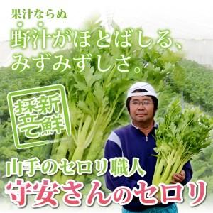 30-006-001.総社市山手・守安さんのセロリ(2Lサイズ1株)