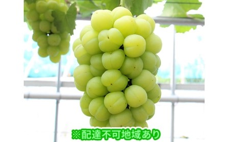 岡山県産 桃太郎ぶどう1房(約500g)