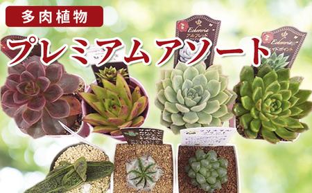 多肉植物特選アソートセット プレミアム5種類