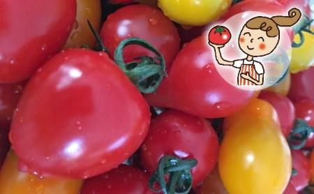 <2022年6月下旬よりお届け>北海道壮瞥産 彩りミニトマト約3kg