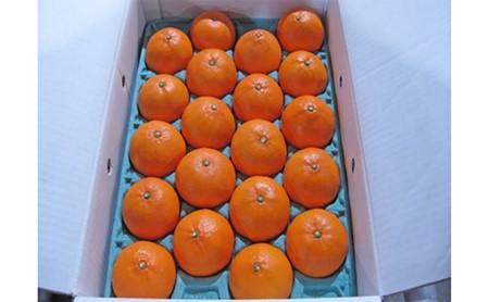 柑橘の大トロ!せとか 約5kg※クレジット決済のみ