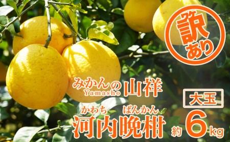 【訳あり】みかんの山祥が贈る 樹齢25年以上の河内晩柑 大玉6kg