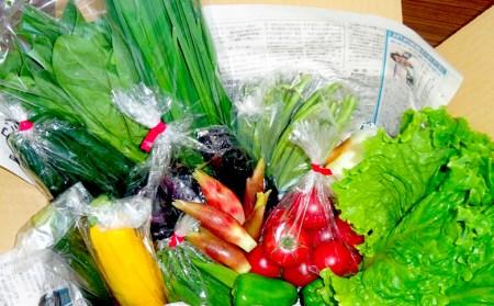 毎月10セット限定!あわ地区 旬な野菜セット