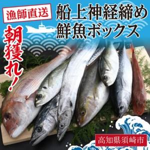 KO002 漁師直送 朝獲れ!高級魚入り!船上神経締め 鮮魚ボックス