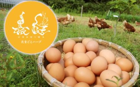 [089001]放し飼い養鶏のたまご 6個入り 3パック