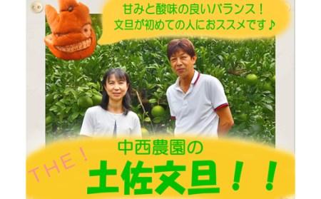 中西農園の土佐文旦 5kg(家庭用)