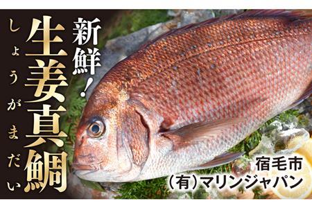 [009004]土佐宿毛の真鯛 贅沢加工
