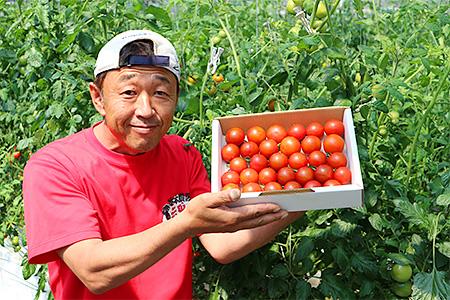 A-27 「贈答用」峯本・農園のミディトマト