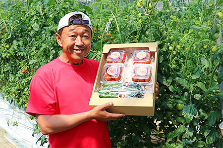 A-28 「家庭用」峯本・農園のミディトマトときゅうりセット