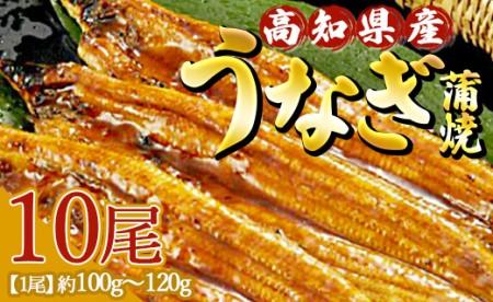高知県産 うなぎ蒲焼き 100~120g 10尾セット Y-25