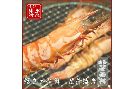 活き〆足赤海老(塩水凍結)500g(8~15尾)