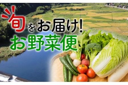こんなの探してた!【少量多品種】四万十育ちの地採れ野菜セット Qjs-21