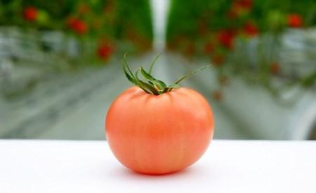 【予約受付】受付4か月で800件超え四万十産トマト「凛と」 Fbg-03