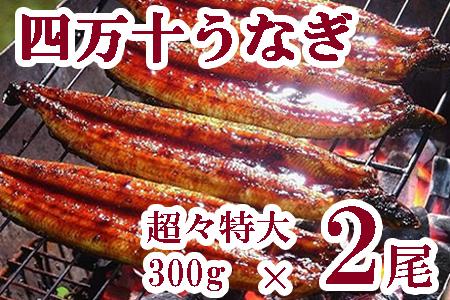 【感謝祭】 四万十うなぎ蒲焼き(超々特大)2本セット 約600g超! Esu-0032