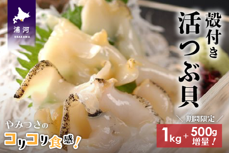 浦河前浜産 活つぶ貝1kg+500g(お刺身用)[B02-054]