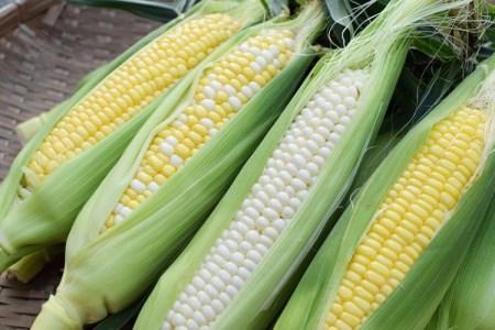 G108 農園直送 朝採りとうもうろこし 4種類食べ比べセット