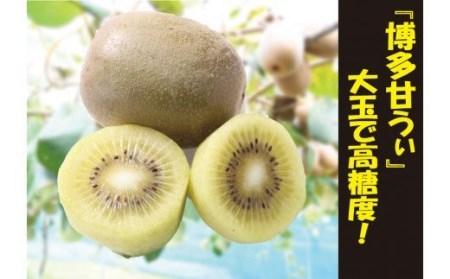 AC-001 【福岡県特産】キウイフルーツ「博多甘うぃ」大玉3.5㎏