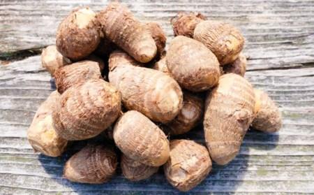 小郡産の里芋「白芽大吉」2.5kg ふくおかエコ農産物認証【10月配送予約】