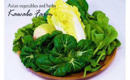 A16 国産アジア野菜の川辺農園 季節の「中華野菜」セット