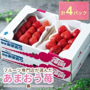 フルーツ専門店が選んだ「あまおう苺」春4パック(大野城市)【1083237】
