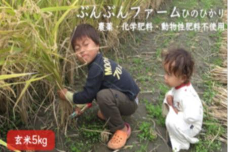 K439-05 ぶんぶんファーム ひのひかり 玄米 5kg (農薬・化学肥料・動物性肥料不使用)