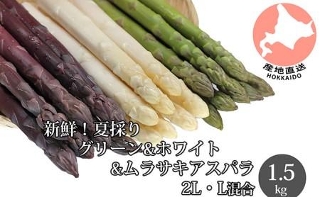 新鮮!夏採り【グリーン・ホワイト・ムラサキアスパラ】2L・L混合(計1.5kg)