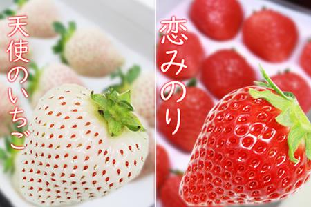 B10-147 白いちごの天使のいちご&恋みのり(各1パック)TMファーム