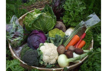 【2617-0103】よしのがり野菜セットS(8品)