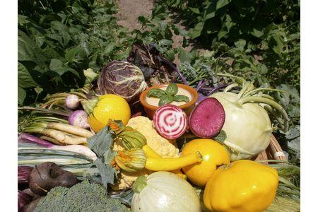 【2617-0115】バーニャカウダ野菜セットS(8品)(頒布会 年間12回 毎月配送