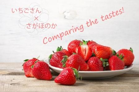 BC016_いちご食べ比べ いちごさん さがほのか