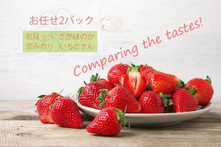 BC018_いちご食べ比べ おまかせ2パック さがほのか いちごさん 恋みのり 紅ほっぺ