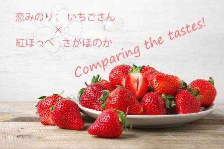 BC019_いちご食べ比べ さがほのか いちごさん 恋みのり 紅ほっぺ
