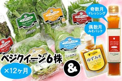 G4 安心・安全な無農薬栽培 葉物野菜 年12回コース(アコルファーム)