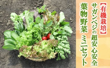 8A15-SV ★有機栽培★サガンベジの超安心安全「葉物野菜・ミニセット」【新鮮採れたて】(A202)