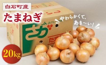 【G-11】白石産 たまねぎ(20kg)