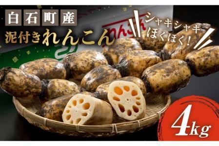【G-3】感謝の増量祭!白石産泥付きれんこん(2kg+2kg)計4kg