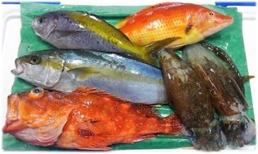 0231 贅沢鮮魚セット