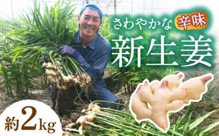 特別栽培新生姜2kg