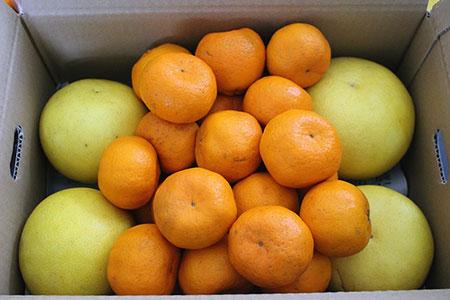 A2901 季節の柑橘農家おまかせ 7kg(家庭用)