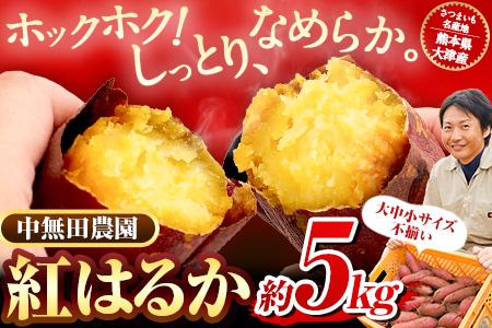 熊本県大津町産 中無田農園の紅はるか 約5kg(大中小サイズ不揃い) 熊本県大津町 《4月中旬-5月中旬頃より順次出荷》 さつまいも 芋 スイートポテト 干し芋にも 名産地 特産品