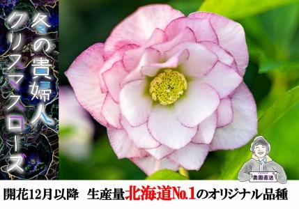 クリスマスローズ(ダブル2鉢) 花言葉:冬の貴婦人