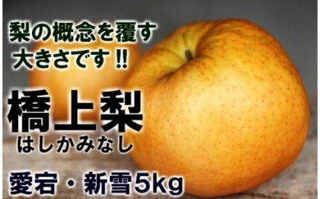 【予約受付開始】辰口農園の橋上梨5kg(品種:愛宕・新雪)